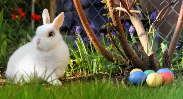 lakeview-somerset-accommodation-easter-offer